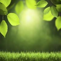 電力自由化を見越しクリーンエネルギーへ外資企業の参入が相次ぐ