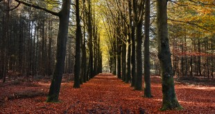 public-domain-images-free-stock-photos-autumn