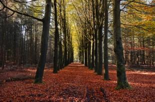 public-domain-images-free-stock-photos-autumn