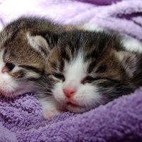 電気代の一部が猫の保護に!猫好きにお勧め!「ネコ電気」の特徴を徹底解説